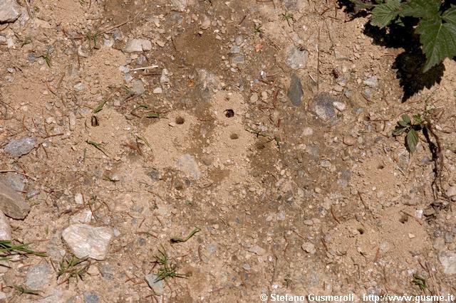 Pictures nowhere animali vespe for Piccole tartarughe di terra